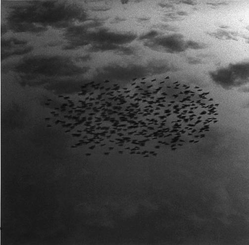 Swallow Migration, Jerusalem Sky, 1986 (86/1 #12)